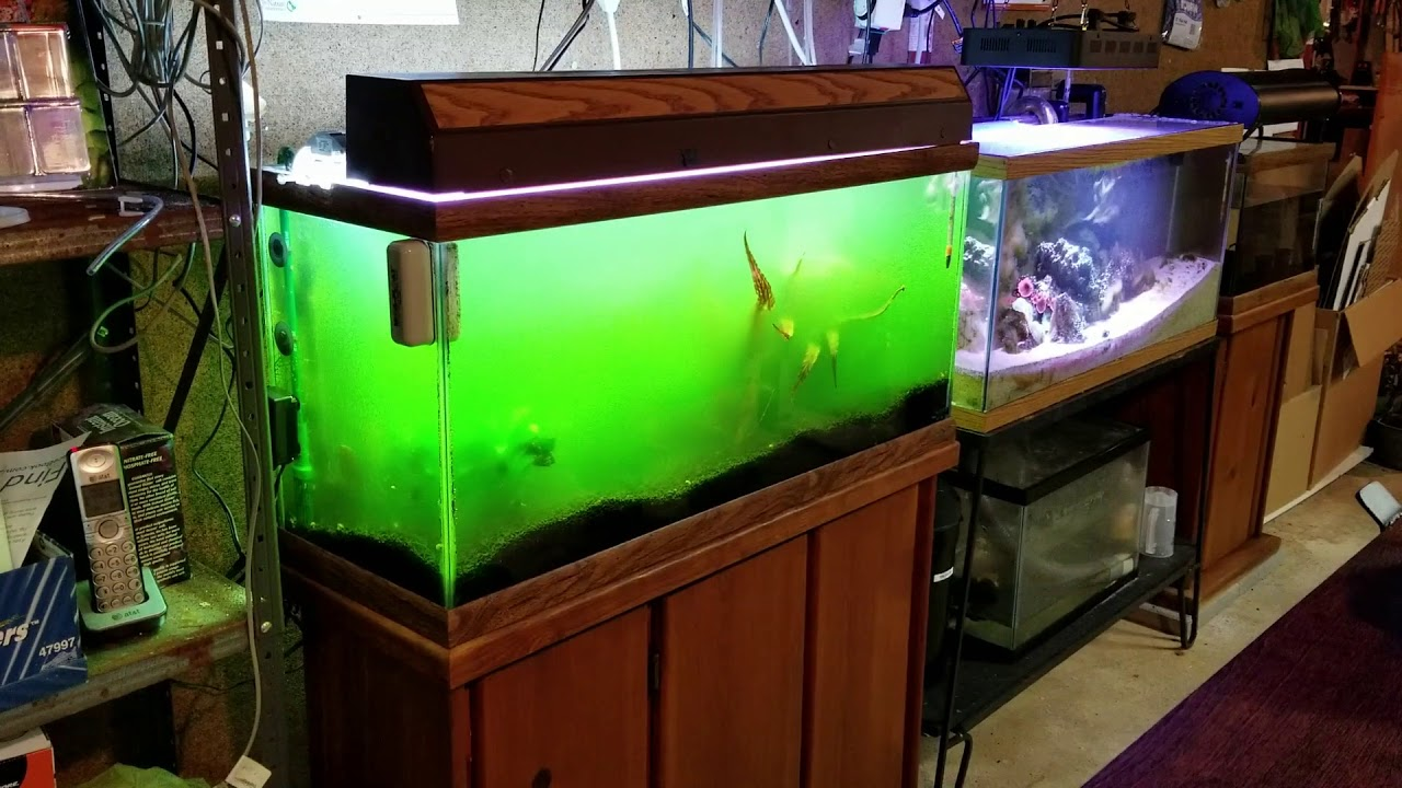 Guide-for-cleaning-fish-tank